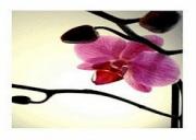 Orhideja-bar D.o.o Bar
